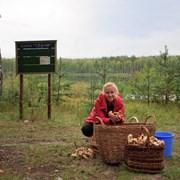 Приглашаем в поход за грибами и ягодами фотография
