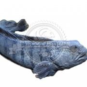 Расширение ассортимента свежемороженой рыбы фотография