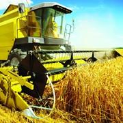 Производство зерновых культур.