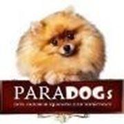Логотип компании PARADOGs сеть зоосалонов - зоомагазинов (Екатеринбург)