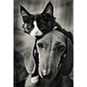 Гостиница для животных «В гостях-как дома!»