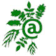 Питомник декоративных растений «Вебсад»