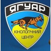 Логотип компании Кинологический Центр Ягуар, ЧП (Новоселки)
