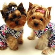 стрижка собак в луганске фото