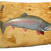 Живая рыба Форель фото