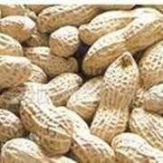 Обжарка орехов, жарка орехов. До 150 тонн в месяц фото