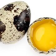 Яйца перепелиные Сквира, Киевская область, яйца перепелиные оптом, яйца перепелиные от производителя. фото