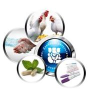 Витаминно-минеральные подкормки для кур