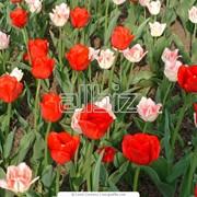 Цветы живые элит фото