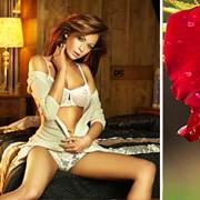 Авторский тренинг Ланы Лисиной «Греческие ласки или искусство поцелуя» VIP (только для женщин) фото