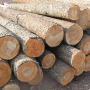 Переработка леса фото