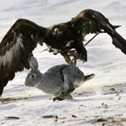 Охота с орлами фото