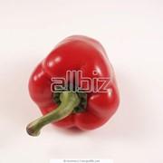 Семена перца сладкого Атрис F1 фото