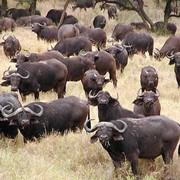 Охота в Ю́жно Африка́нской Респу́блике фото