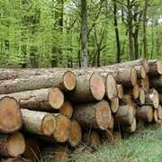 Выращивание строительного леса фото