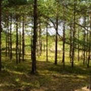 Разработка (обновление) концепций, программ по развитию лесного комплекса субъекта РФ в условиях нового лесного законодательства и финансового кризиса, с учетом тенденций внутреннего и внешнего рынков лесной продукции. фото