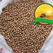 Нут узбекский горох фото