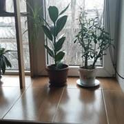 Продам 1-комн. квартиру в Алматы фото