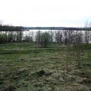 Участок 4,2 Га у озера Ужо в Псковской области фото