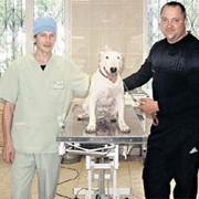Диагностические исследования ветеринарные (О9З)4О8-О9-З6 фото