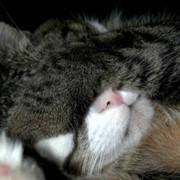Усыпление кошек фото
