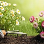 Профессиональный уход за садом и огородом фото