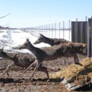 Транспортировка животных фото