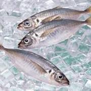 Рыба свежемороженая фото