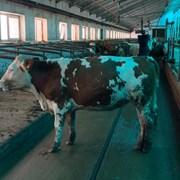 Кабель КПВЛ 24х1 лифтовой фото