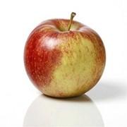 Яблоки в Ужгород фото