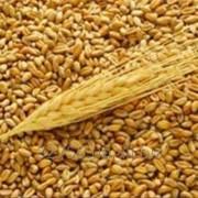 Зернопродукты фото