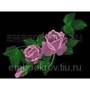 Розы 02 фото