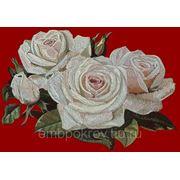 Розы 01 фото