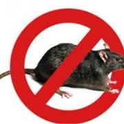 Протравленное зерно (средство для уничтожения мышей и крыс) фото