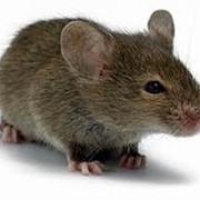 Средство от мышей. Николаев. Обработка от грызунов.