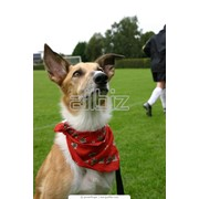 Дрессировка собак Львов фото