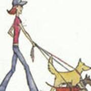 Прогулки с животными. фото