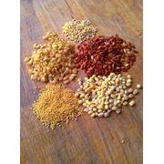 масличные культуры и зерновые фото