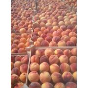 Продаем персик фото