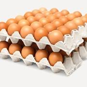 Яйцо инкубаторное куриное фото