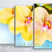 Модульна картина на полотні Орхідеї код КМ100130-031 фото