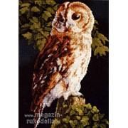 Owl фото