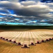 Фермерское хоз-во 8000 га фото
