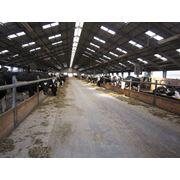 Коровник с беспривязным содержанием (Чехия). Проект составлен и реализован фирмой«Brunnthaller» фото