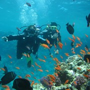 Дайвинг-тур в Акко - Средиземное море фото