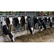 Установки для животноводческих комплексов фото
