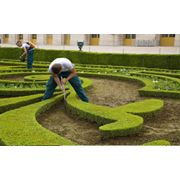 Услуги садовника в Молдове фото