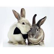 Premixuri pentru iepuri nutrii фото