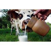 Заменители молокаКорма для животных фото