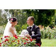 Фото в Молдове профессиональные фотосьемки фото